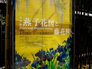 Poster da exposição especial com destaque para as íris de Ogata Korin