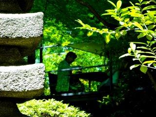 Café com cobertura de vidro no meio da vegetação