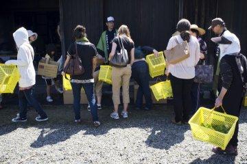 Посетители скидывают собранные листья в огромную корзину