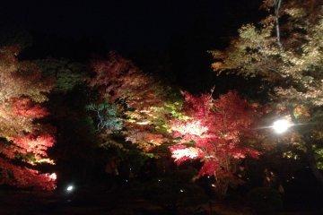 Matsushima Foliage Light Up