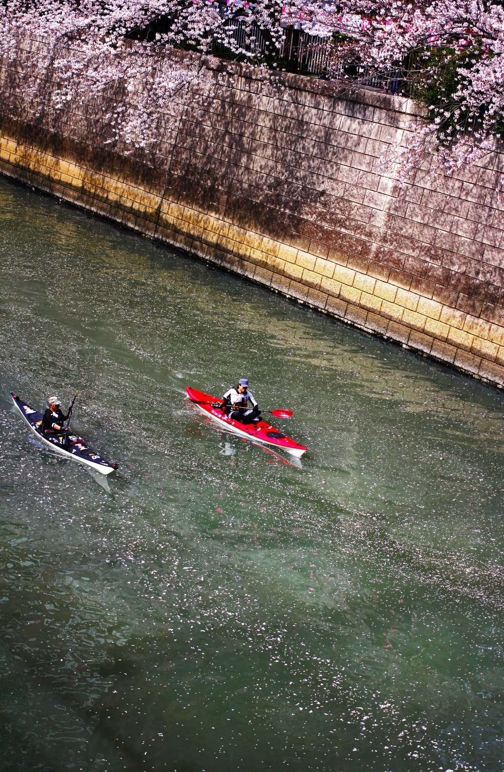 There were quite a few people taking advantage of the calm water, warm weather and beautiful scenery by having a short kayak ride along the river. It was also nice to see the first petals floating on the water—a perfect day for kayaking.