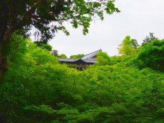Ponte com cobertura de telhas cinzentas e corredores aninhados no meio da floresta verde