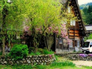 ใบไม้ของฤดูใบไม้ผลิและดอกซากุระพันธ์บานช้า
