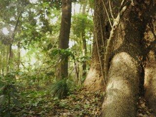 Couleurs dorées naturelles dans la forêt autour du sanctuaire
