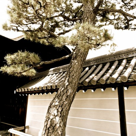 Walking Around the Myoshin-ji Temple Complex