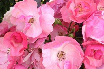 <p>Blooming Bright.</p>