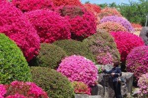 鶴峯公園の重なるツツジの山