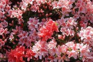 それぞれの花がとてもきれいです。