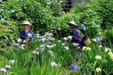 Irises at Yakushiike Park