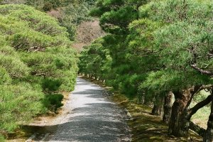 Pine aisle - entrance to the Upper Villa at Shugakuin
