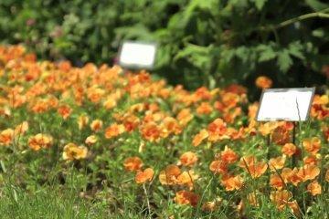 สวน Oizumi Ryokuchi
