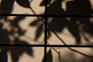 The evening sun created beautiful shadows of the leaves outside onto the paper screen.