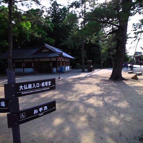 วัดโทะไดจิ (Todaiji)