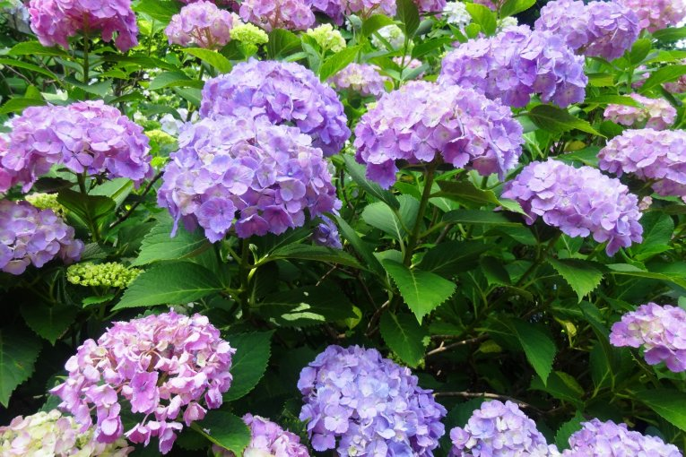 Цветы в Хондо-дзи