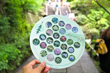 <p>With paid admission, receive this adorable hand fan designed with photos of the hydrangeas in bloom.</p>