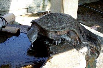 돌 거북이가 입에서 물을 내뿜고 있다. 이 석조(80)는 1880년 마쓰다이라, 후쿠이의 전 지사가 기증한 것이다