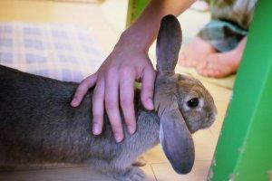 My favorite rabbit: his ears look beautiful!