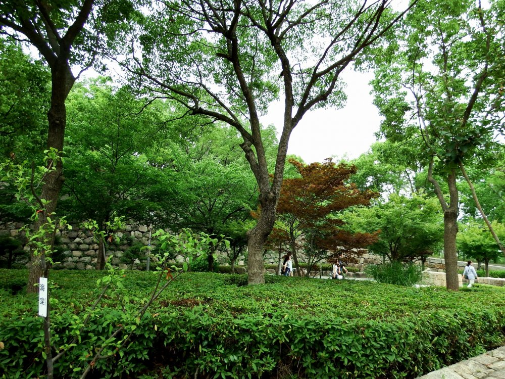 Pohon hijau subur di taman