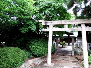 There are small Torii gates in the corner of Hōkoku Shrine's grounds which looked really pretty