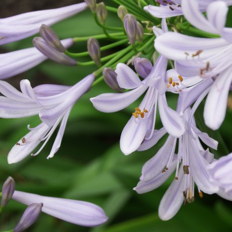 大阪城公園の可憐な花