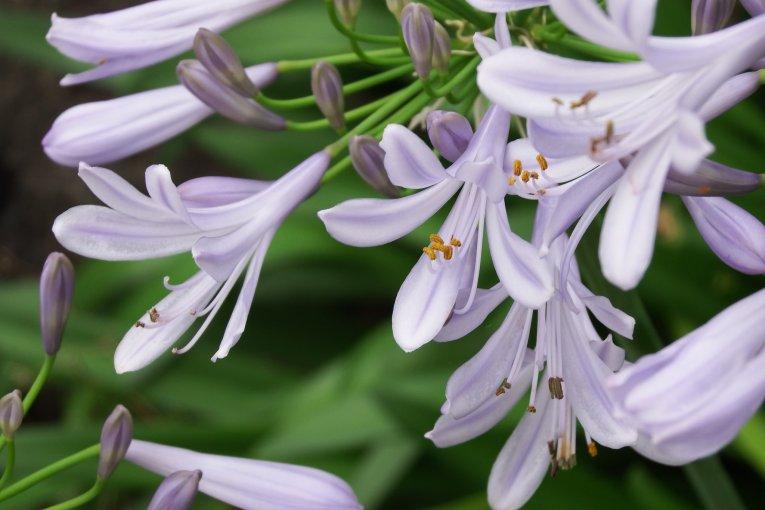 ดอกไม้สวยๆในสวนแห่งปราสาทโอซะกะ
