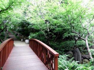 Cây cầu gỗ dẫn đến trung tâm vườn rừng