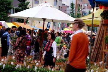 東京入谷の夏の風物詩 朝顔市
