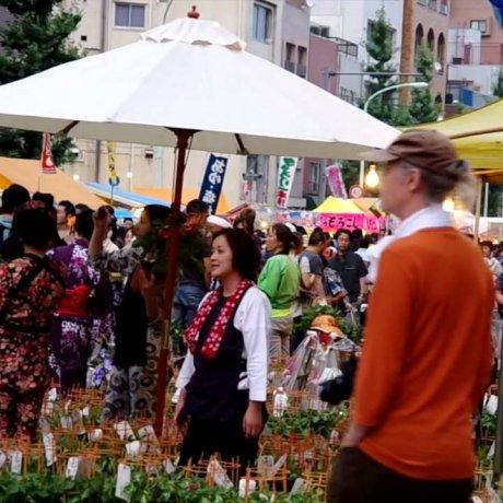 Lễ hội hoa bìm bịp Iriya