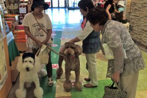 LaLaport Tokyo Bay is pet-friendly shopping park