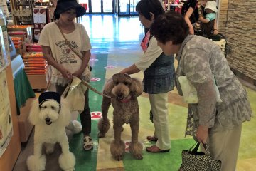 <p>LaLaport&nbsp;Tokyo Bay is pet-friendly shopping park</p>