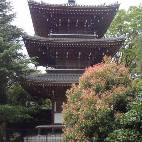 Shinagawa's Tozen-ji Temple