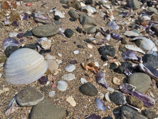 The beach at Cape Tomyozaki is a great place to collect seashells, sea glass, and pottery pieces