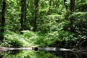 <p>The peaceful Acorn Pond in the middle of the forest</p>