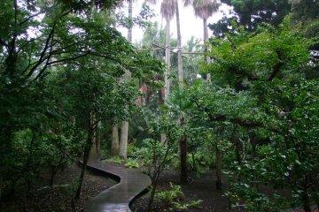 Samuel Cocking Garden - Enoshima