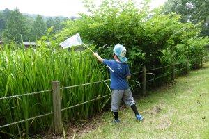 La chasse aux libellules et autres insectes est une activité trèspopulaire chez les enfantspendant l'été
