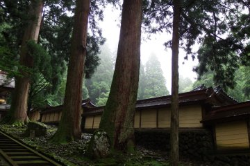 <p>Ancient tall cedar trees standing beside one of the temple buildings</p>