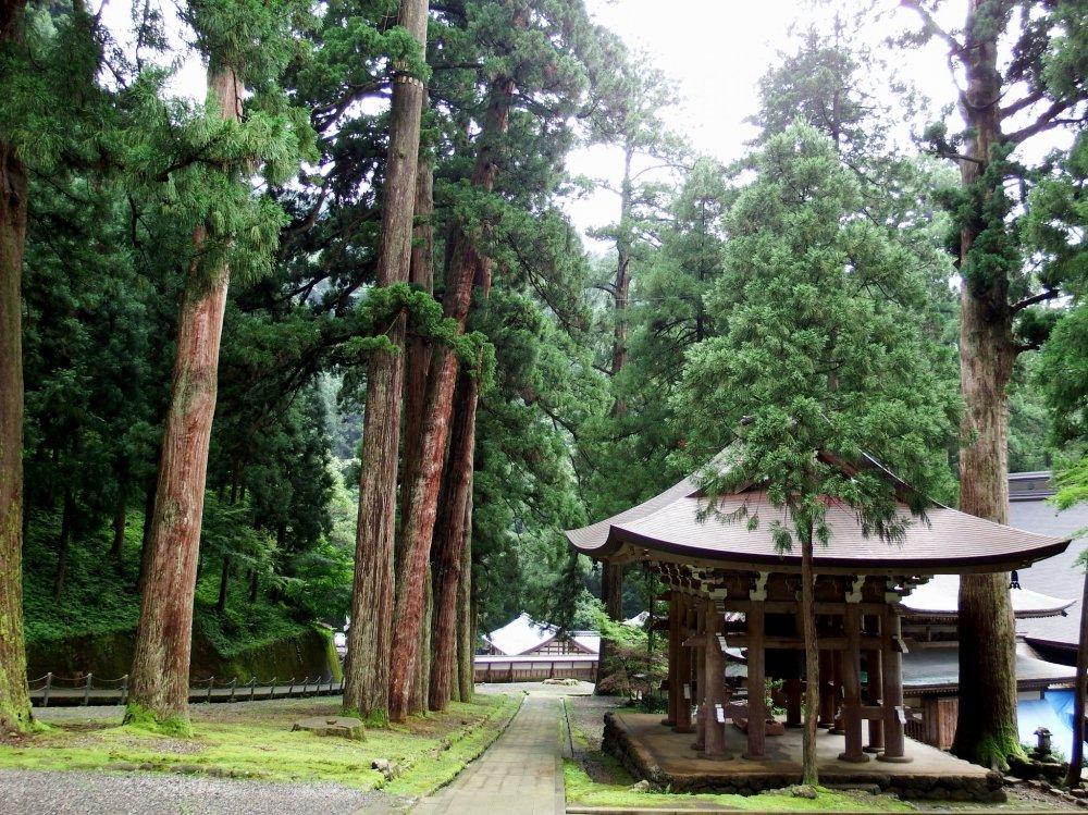 유명한 종탑은 조용한 숲에 서있다
