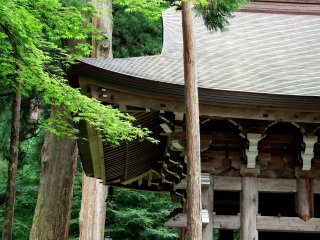 높은 삼나무에 둘러싸인 영평사종탑