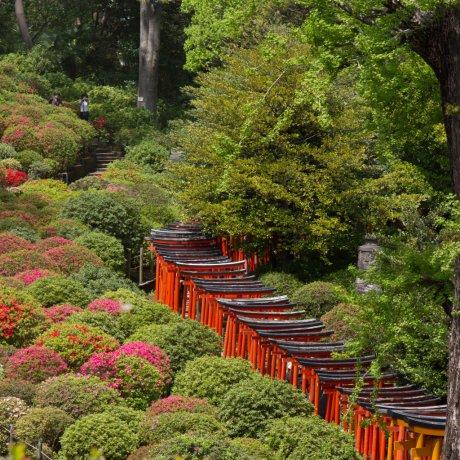 Tokyo's Nezu Shrine
