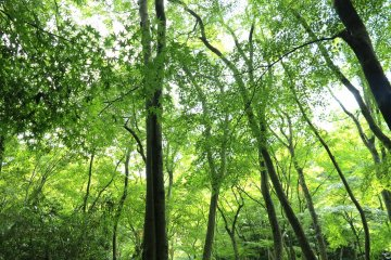 <p>祗王寺里的丛林</p>
