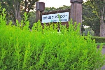 小金井公园