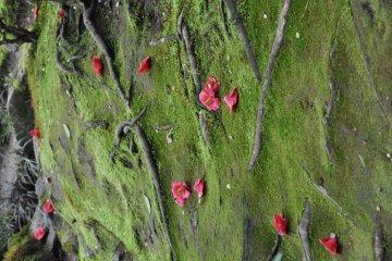 Fallen Flowers on moss