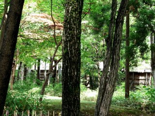 Tall trees provide cool shade on a hot summer day