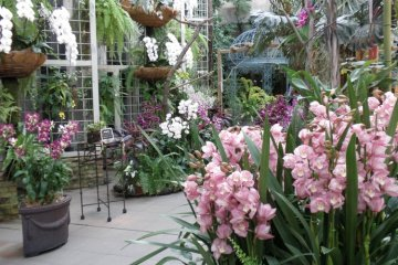 Orchids and flowers of all shapes, sizes and varieties can be enjoyed year round