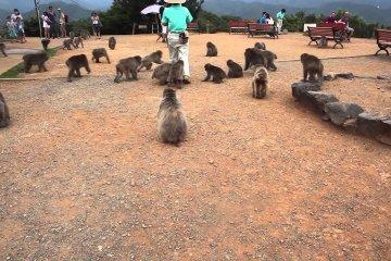 สวนลิง Iwatayama