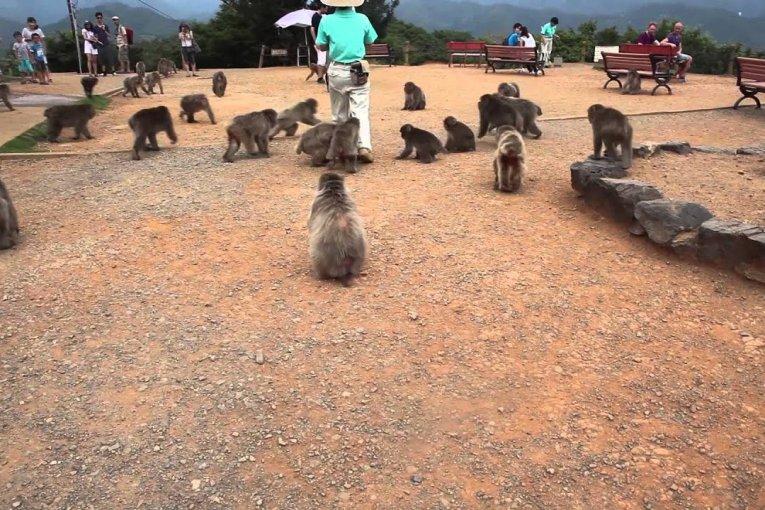 Taman Monyet Iwatayama