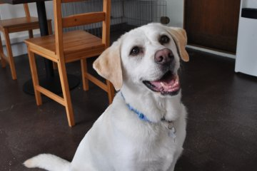 <p>Resident buddy dog - looking for a home.&nbsp;</p>