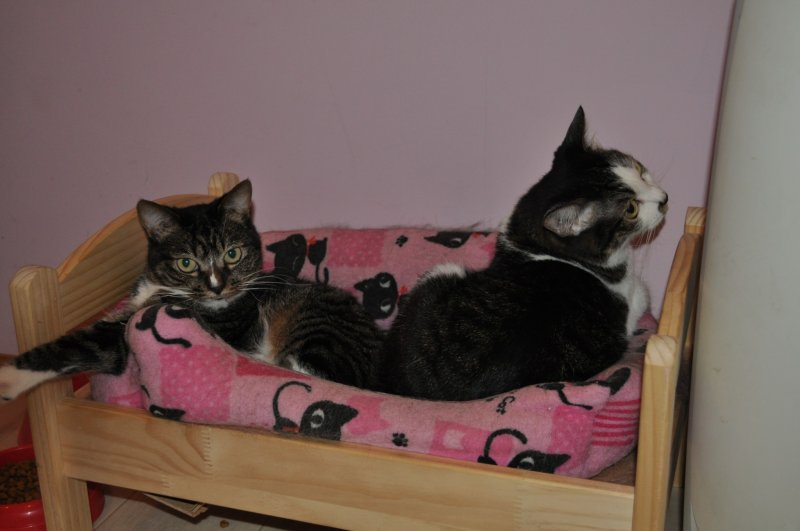 <p>Resident buddy cats - looking for homes.</p>
