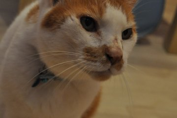 <p>Resident buddy cat - looking for home.&nbsp;</p>