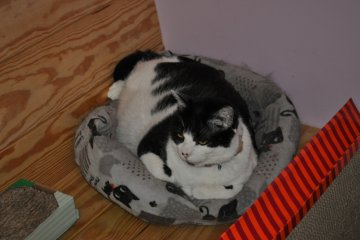 <p>Resident buddy cat - looking for home.</p>